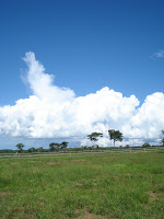 A flat field with sparse vegetation on the horizon and huge white clouds rising up into the blue, blue sky